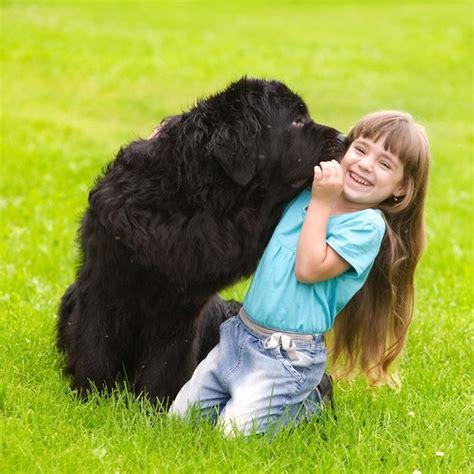 cani da appartamento adatti ai bambini psy rodzinne idealne psy dla rodzin z dzie艸mi