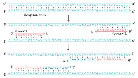 how much template dna for pcr images templates design ideas