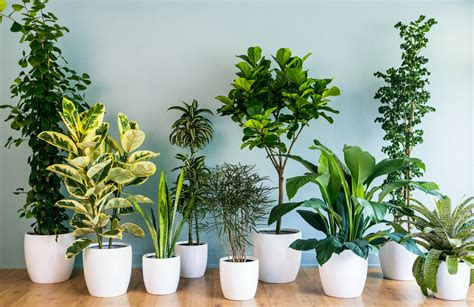 using plants in home decor house plant decor ideas decorate with indoor plants