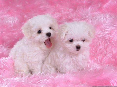 baby puppy baby wallpapers wallpaper cave