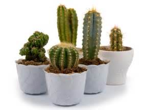 Small House Plant small indoor plants to decorate house boldsky com