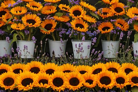 new year flower fair 2018 southport flower show 2018 exclusive to greatdays
