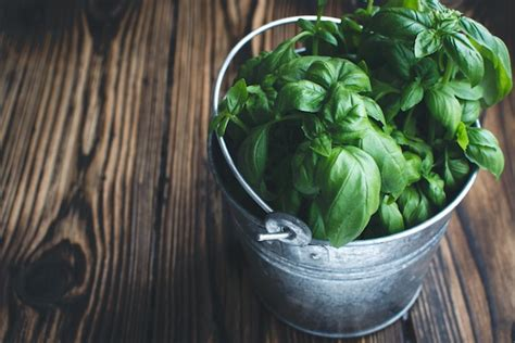 growing herbs inside how to grow herbs indoors well good