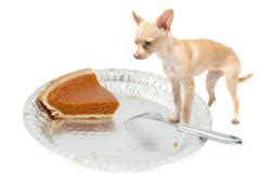 what foods can kill dogs shocking thanksgiving day foods that can kill your