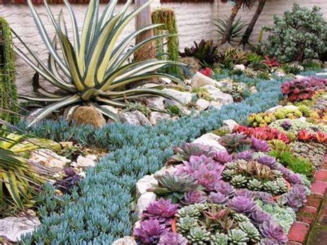 creare aiuole giardino aiuole di piante grasse piante grasse creare aiuole