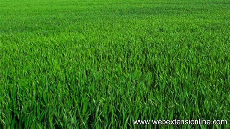 wallpaper abstract grass free hd natural green grass wallpaper webextensionline