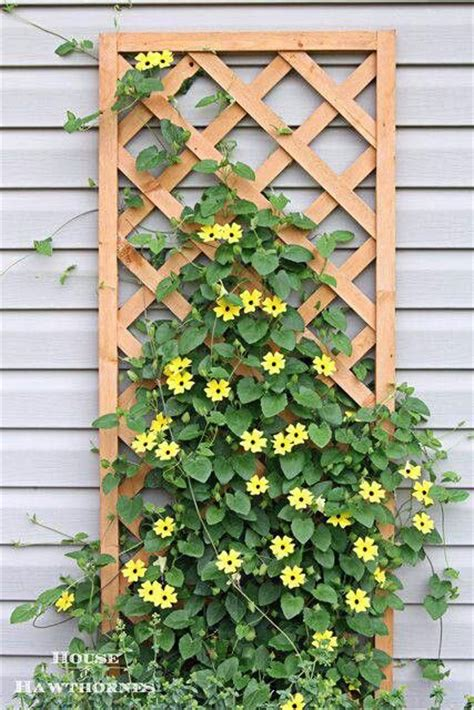 garden structures for climbing plants black eyed susan vines aka heaven on earth heavens