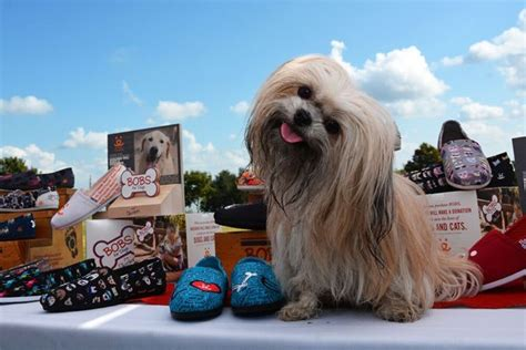 bobs for dogs bobs for dogs helps save them all skechers the source