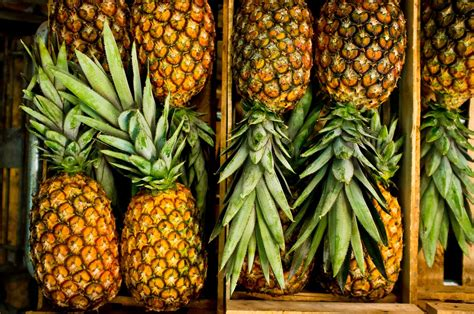 Home Garden Interior Design Pineapple Storage And Selection