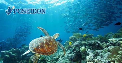 poseidon dive poseidon outer reef cruises douglas snorkel dive cruise