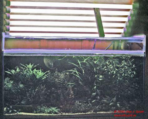 beleuchtung pflanzen aquarien r 252 ckw 228 nde