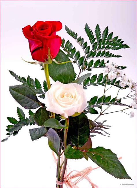 imagenes bonitas rosas rojas ramos de flores con hermosas rosas rojas y blancas