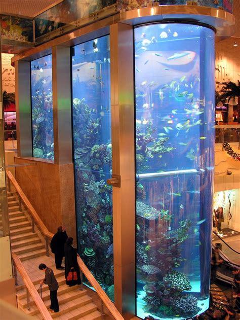 aquarium for home 311 best images about home aquariums on pinterest