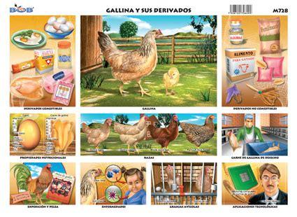 derivados de los animales derivados de la gallina gallina y sus derivados
