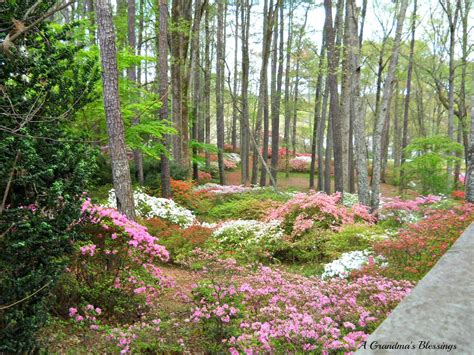 Callaway Gardens by A S Blessings My Day At Callaway Gardens