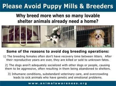 puppy mill vs breeder avoid puppy mills and backyard breeders animal welfare backyards
