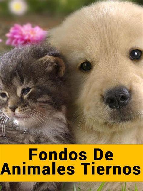 imagenes fondo de pantalla animales fondos de animales tiernos android apps on google play