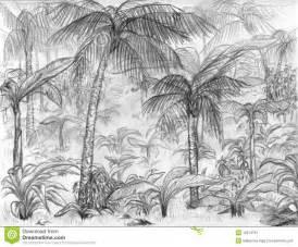 Plants And Animals In A Tropical Rainforest - dschungellandschaft stockbild bild 12274791