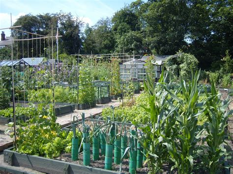 Kitchen Layout Guide your complete guide to maintaining a successful allotment