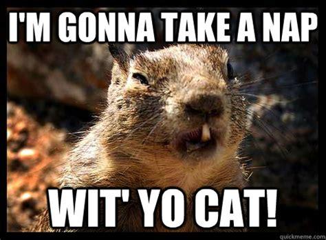 Ugly Cat Meme - ugly squirrel memes quickmeme
