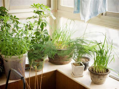 start  indoor garden    smallest