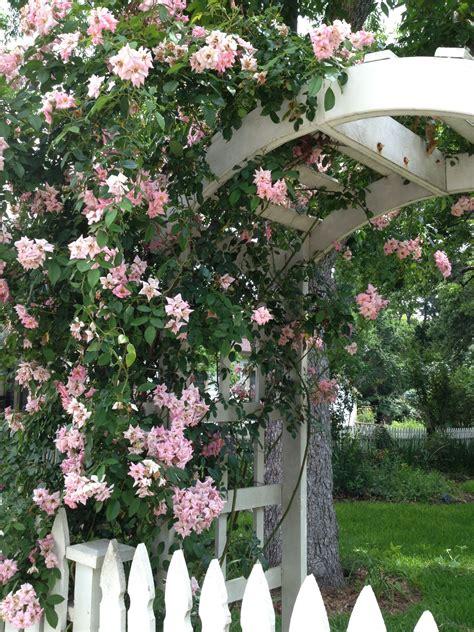 antique rose emporium brenham