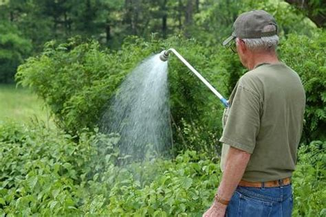 Best Way To Water A Vegetable Garden Best Way To Water A Vegetable Garden