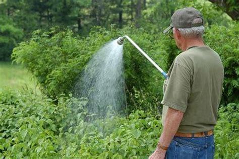 Best Way To Water A Vegetable Garden Best Way To Water Vegetable Garden