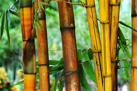 membuat jemuran bambu cara membuat kerajinan bambu sederhana dan cantik