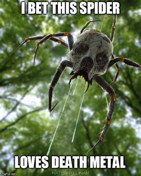 Funny Spider Meme Pictures To - death metal spider imgflip