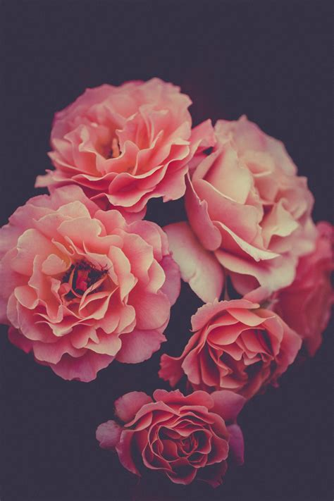 Floral Flowers by 100 Flowers Images Free Images On Unsplash