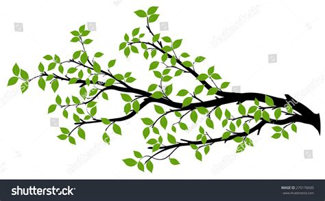 tree branch with green leaves over white background