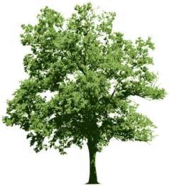 free images of trees tree free vector 4 812 free vector for