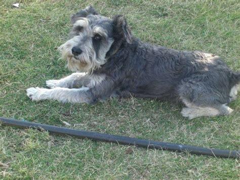 lost dogs arizona az lost dogs arizona uslostdogregistry