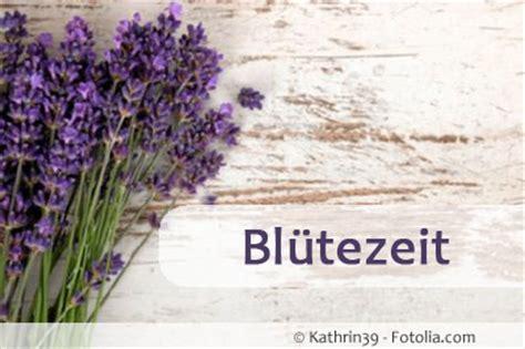 lavendelblüte provence wann wann bl 252 ht lavendel in deutschland bzw in der provence