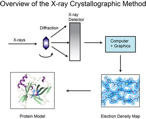 protein x crystallography what is the difference between determining a protein s