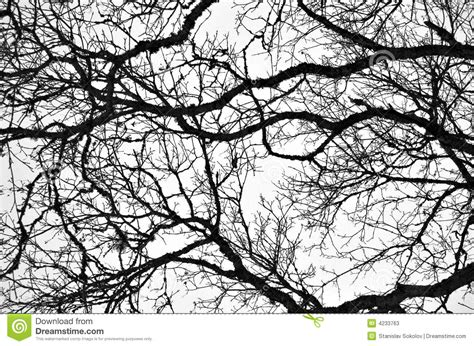 black and white tree pattern bare branches 2 stock image image of abstract branches