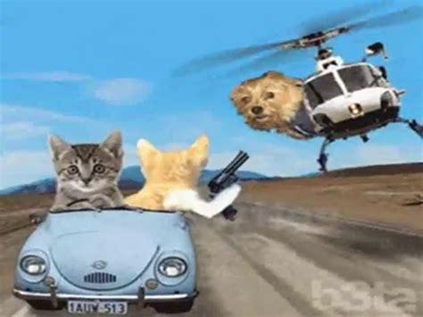 kumpulan foto kucing lucu bergerak gerak youtube