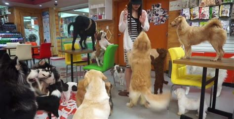 puppy cafe la l a s adoptable cafe to inaugural pup up event this week