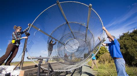 Wire Teamwork mokelumne river wire fyke traps