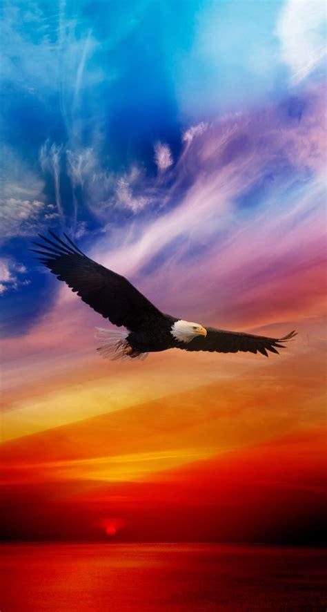 flying eagle iphone wallpapers atmobile bird nature scenery bald eagle eagle wallpaper