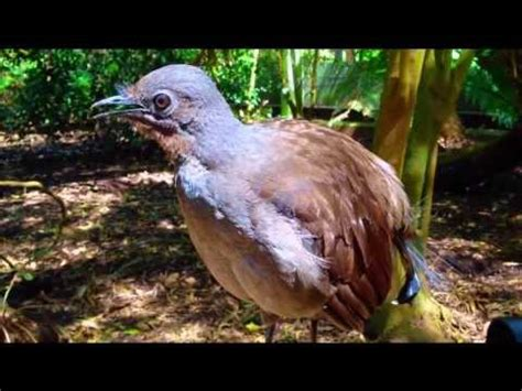 bird mimicking toy gun car alarm and more youtube