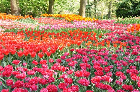 Flower Garden In Park 4k Ultra Hd Wallpaper And Background Flower In The Garden