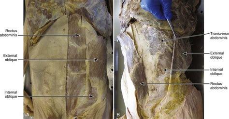 httpclinicalgatecomanatomy  mechanics
