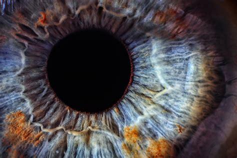 imagenes de ojos zoom jane elliot and the blue eyed children experiment