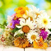 regalare fiori significato significato bucaneve significato fiori