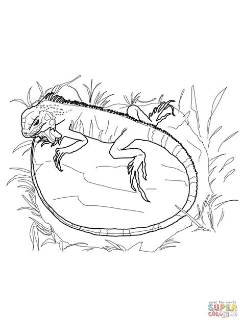 marine iguana coloring page marine coloring page coloring home