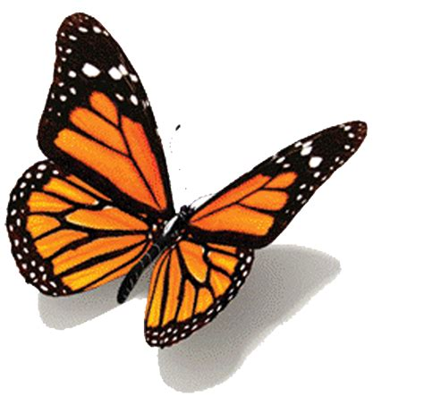 Animated Butterfly Gifs Google Search Butterflies Images Of Animated Butterflies