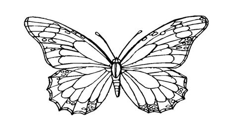 monarch butterfly template printable butterfly coloring template to print grig3 org