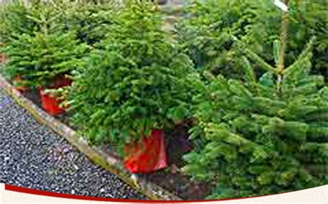 weihnachtsbaum verkauf bad honnef hof kickartz